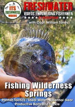 bluegill panfish in the spread fishing video william toney florida springs